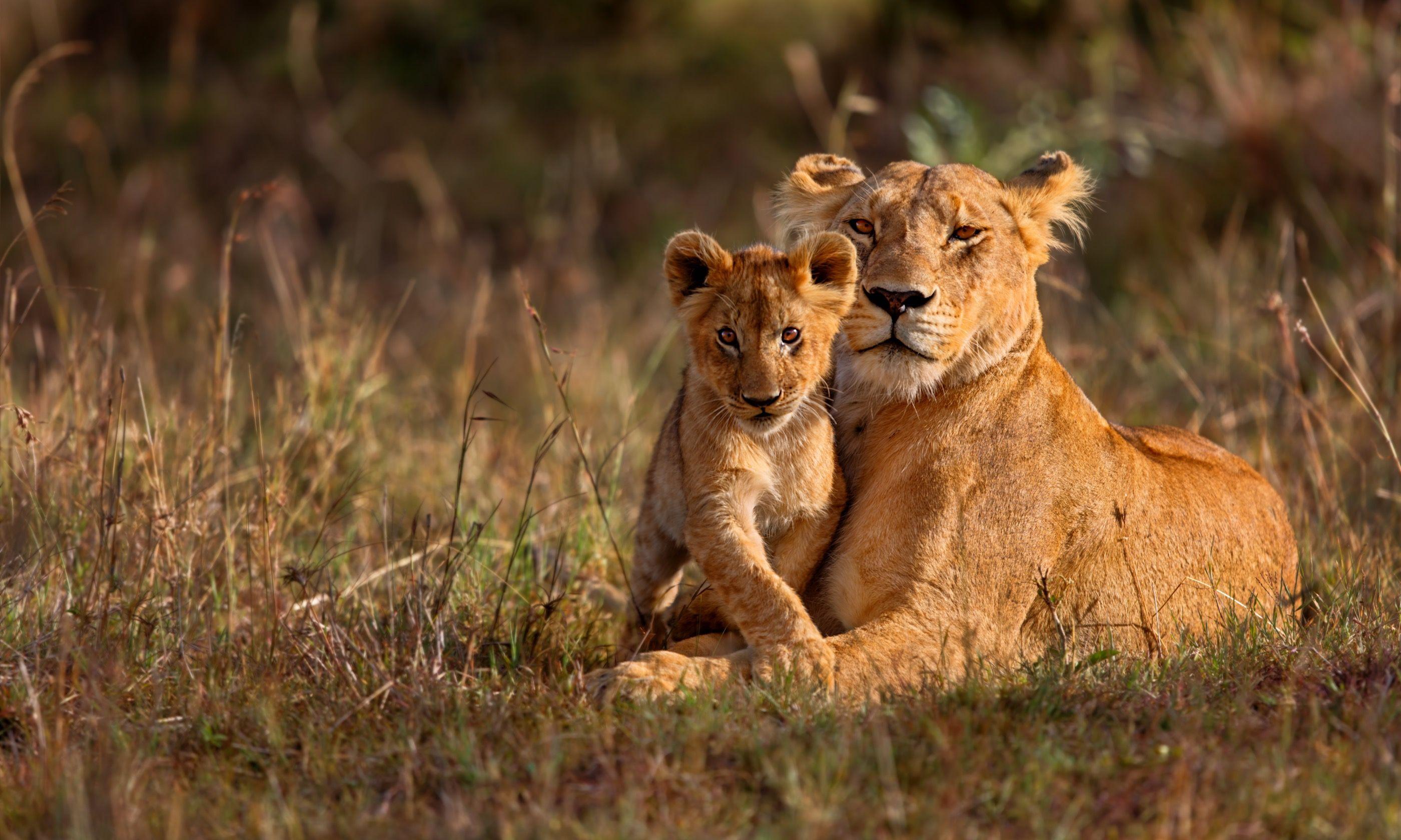 Lioness and cub, Masai Mara (Shutterstock.com)