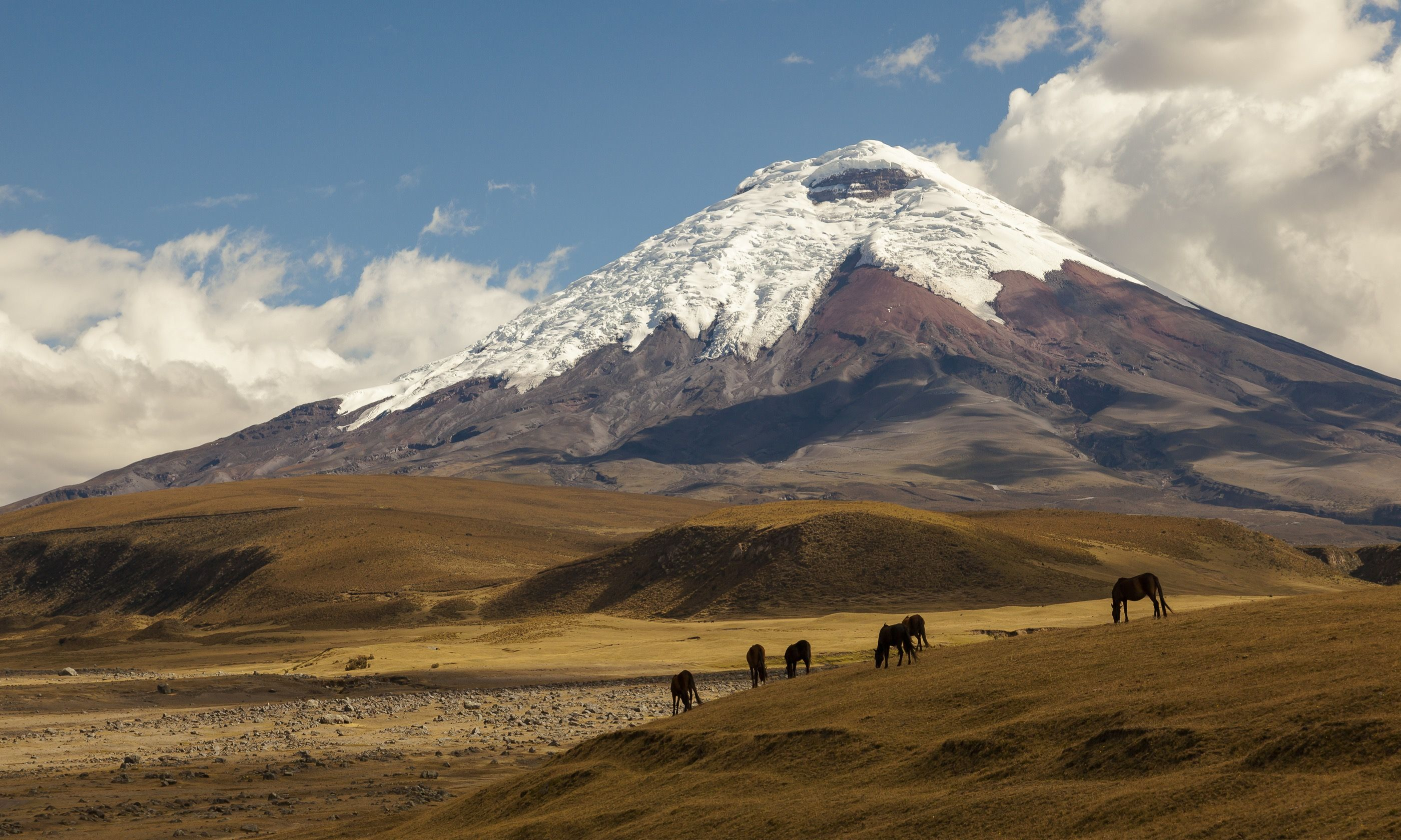Wild horses in front of Cotopaxi (Shutterstock.com)