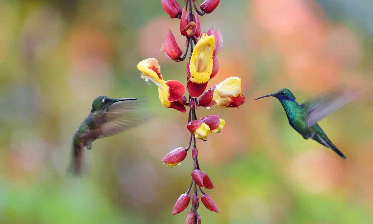 Hummingbirds in Ecuador (Shutterstock.com)