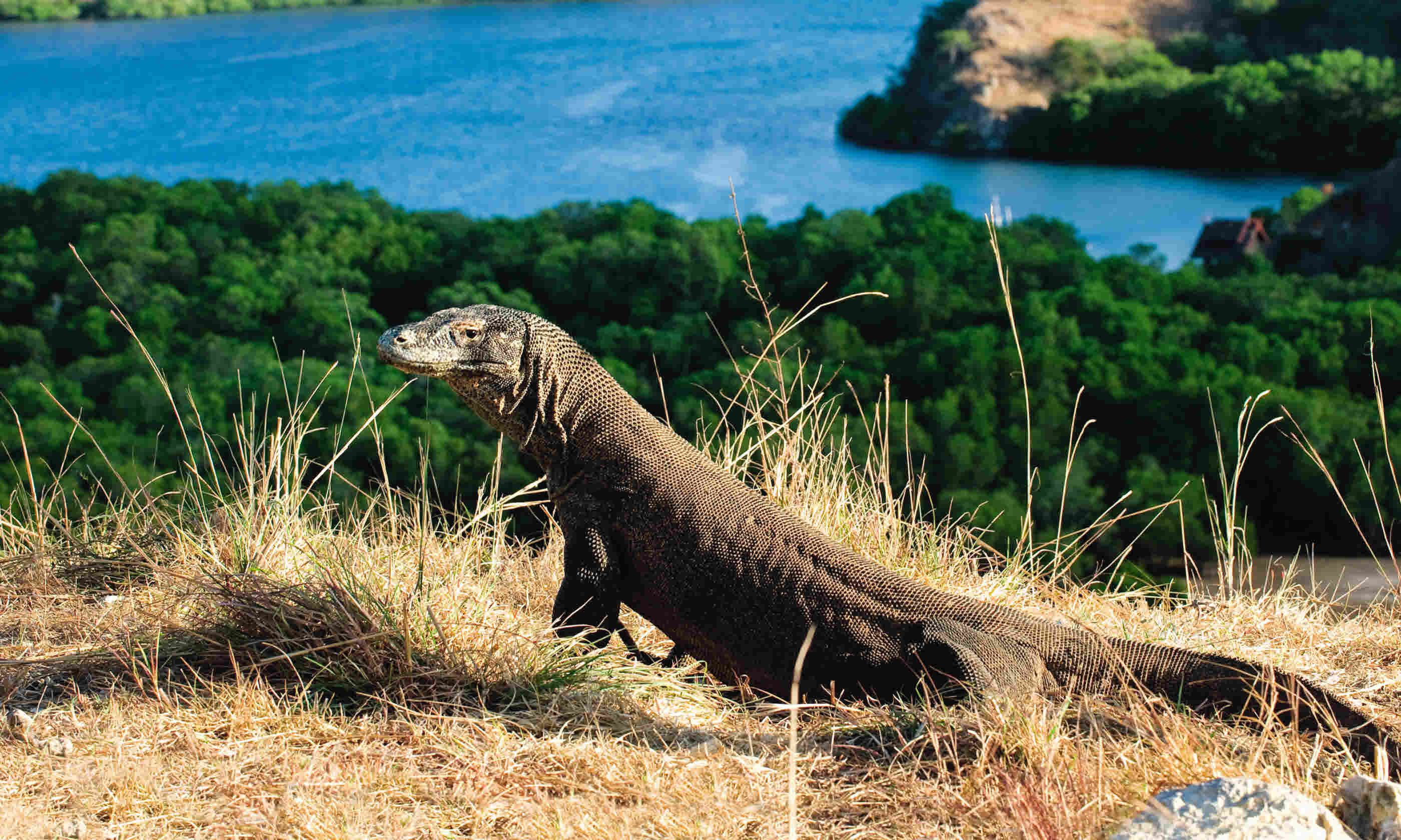 Komodo Island (Dreamstime)