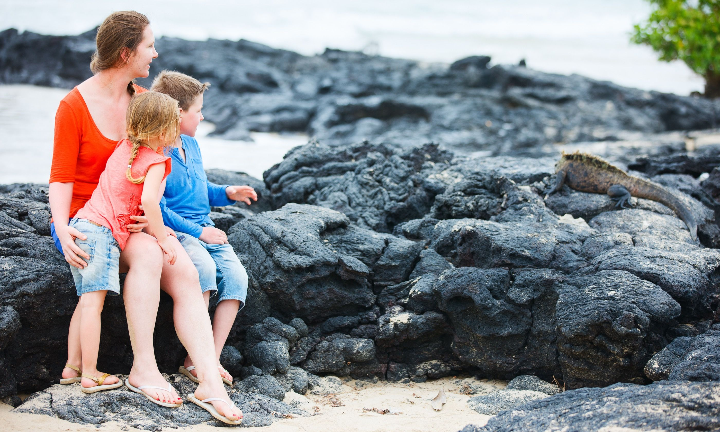 A family comes face to face with a marine Iguana (Shutterstock.com)