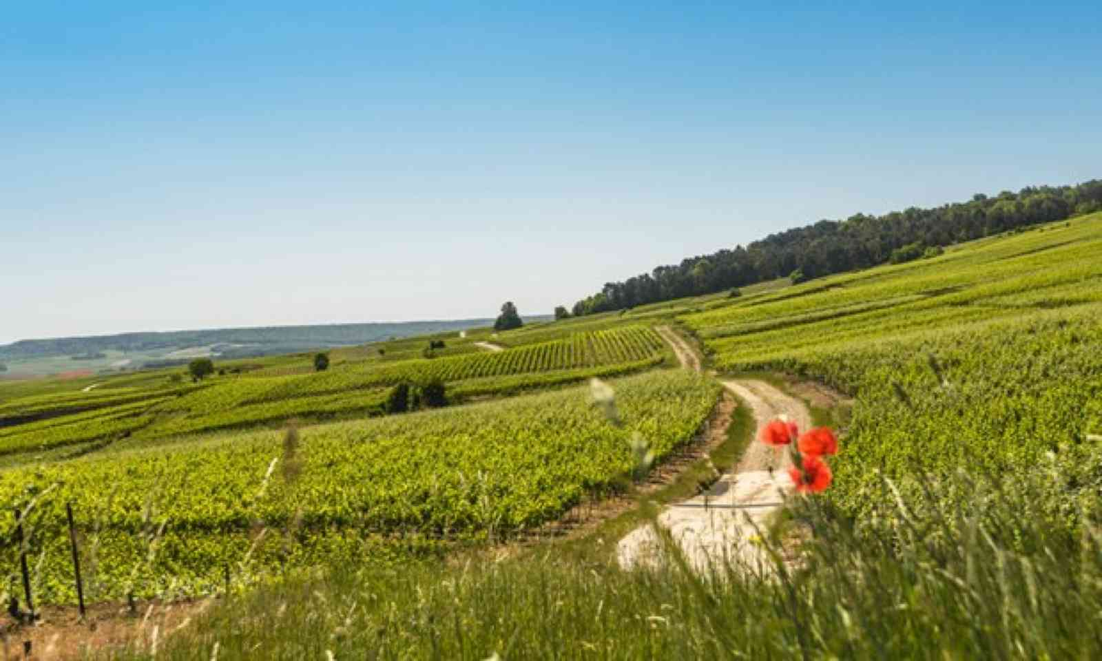 Landscape of Champagne, France (Shutterstock)