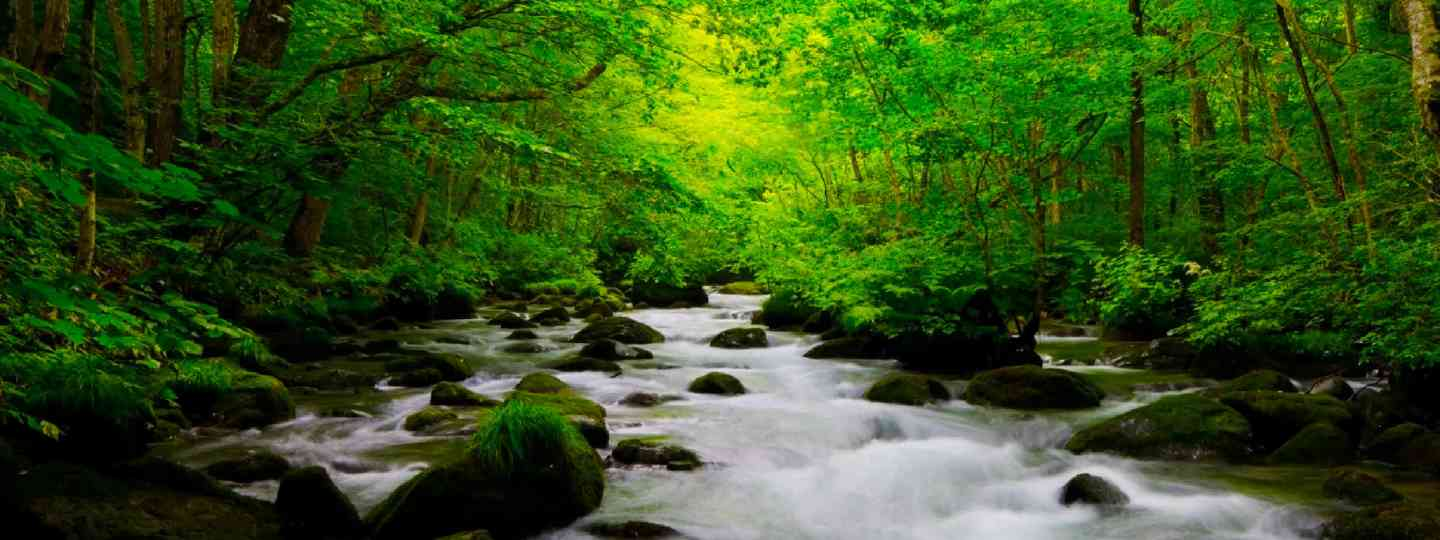 Towada-Hachimantai National Park (Shutterstock: see caption below)