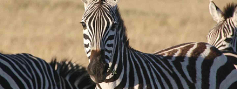 Check out our ultimate safari guide (Pau Sabria)
