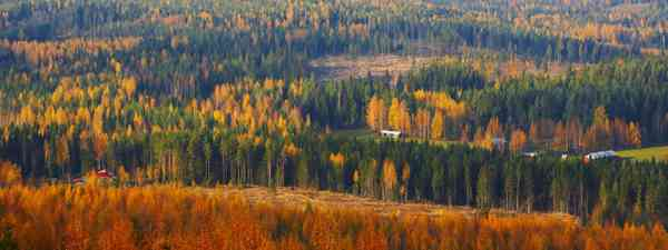 Autumn colours in Finnish Lapland (Shutterstock: see credit below)