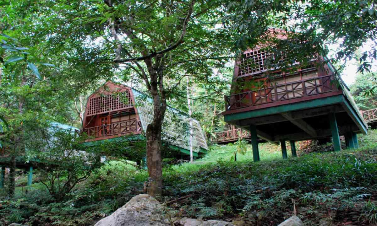 Jungle lodge (Tabin Wildlife Resort)