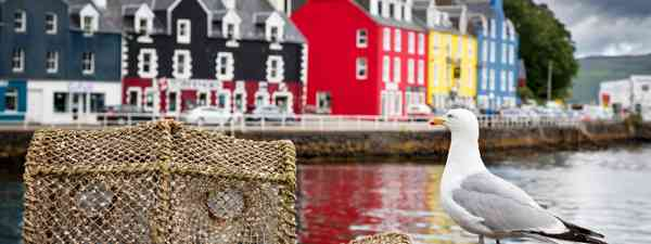 Tobermory, Isle of Mull (Dreamstime)