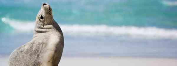 Seal Bay, Kangaroo Island (Shutterstock: see credit below)