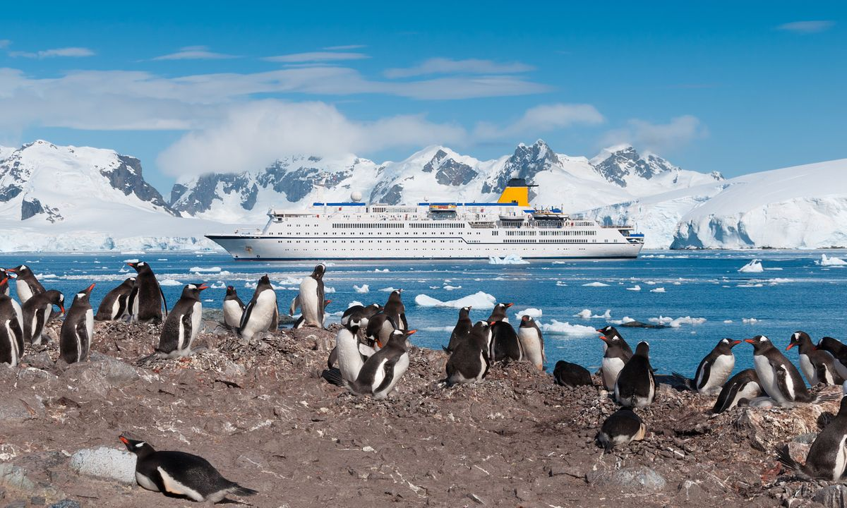 7 Antarctic adventures you'll want to book right now