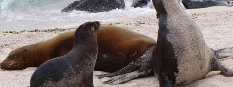 Sea lions (David Berkowitz)