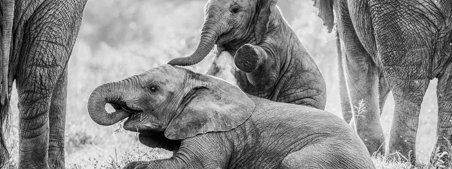 Brendon Jennings / Remembering Elephants