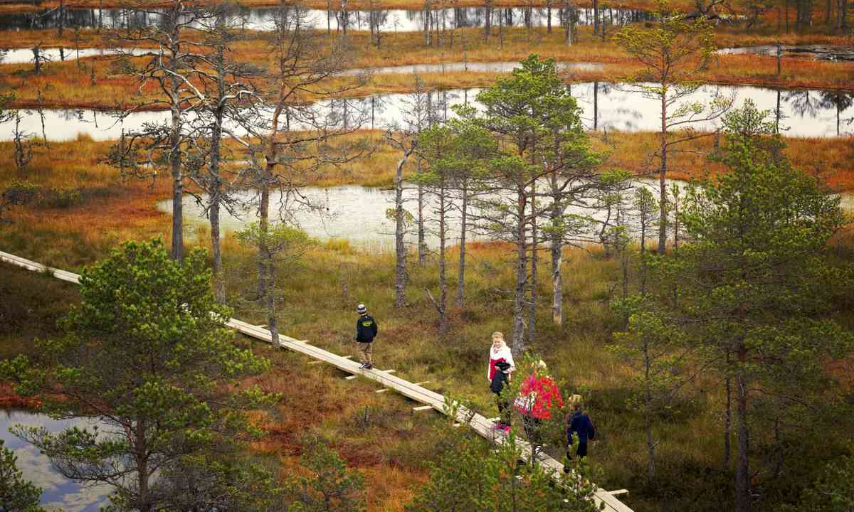 Walking across the bogs in Lahemaa National Park (Dreamstime)