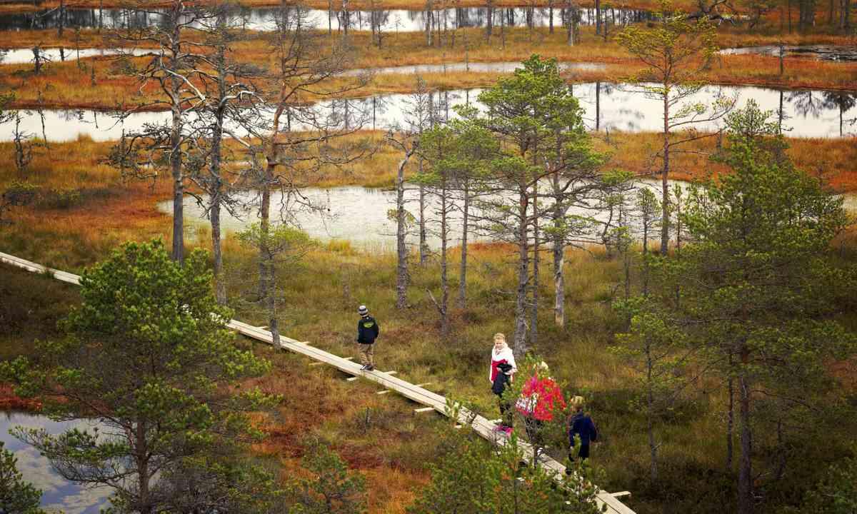 Walking across the bogs in Lahemaa National Park (Dreamstime)