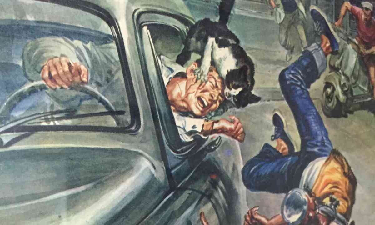 The dangers of driving with cats exposed at Kotor Cats Museum (Peter Moore)
