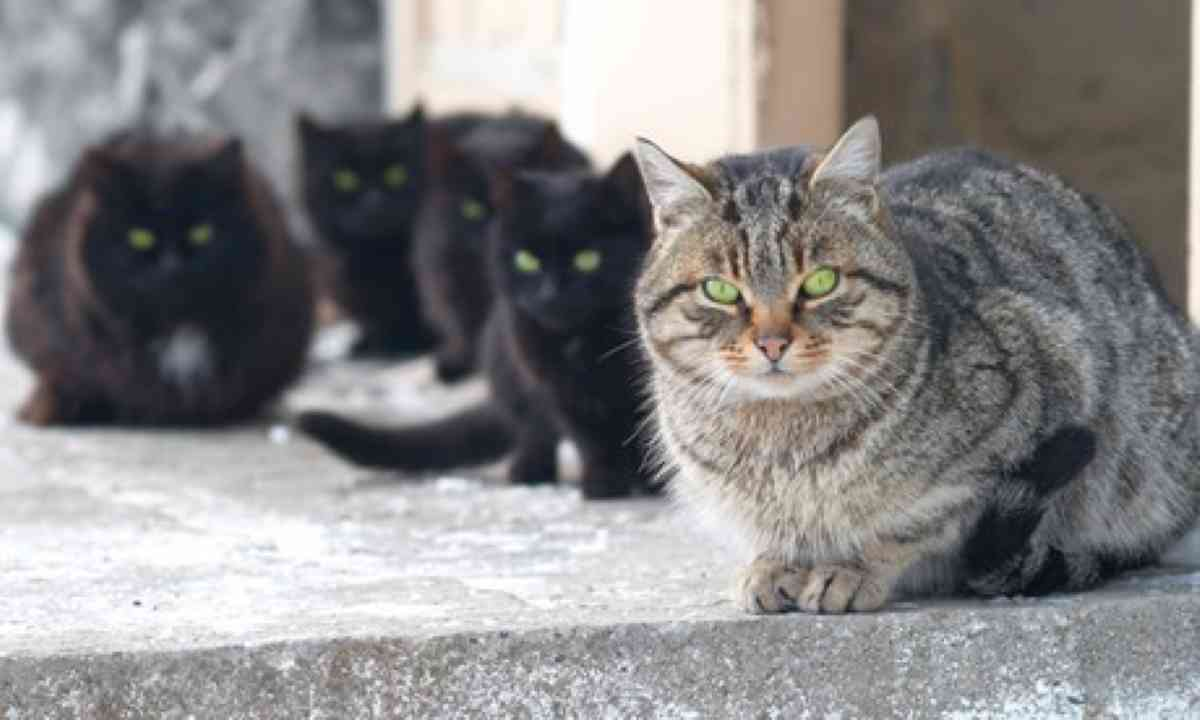 A group of cats, possibly in Romania (Shutterstock.com)