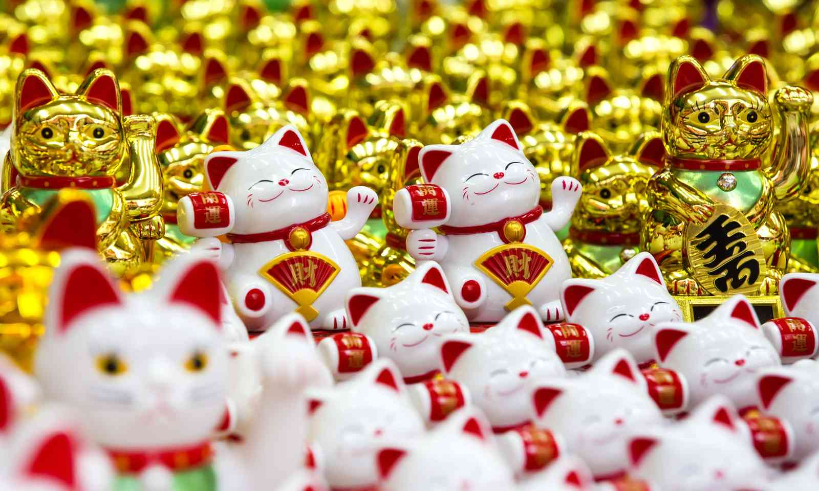 Lucky cats (Dreamstime)