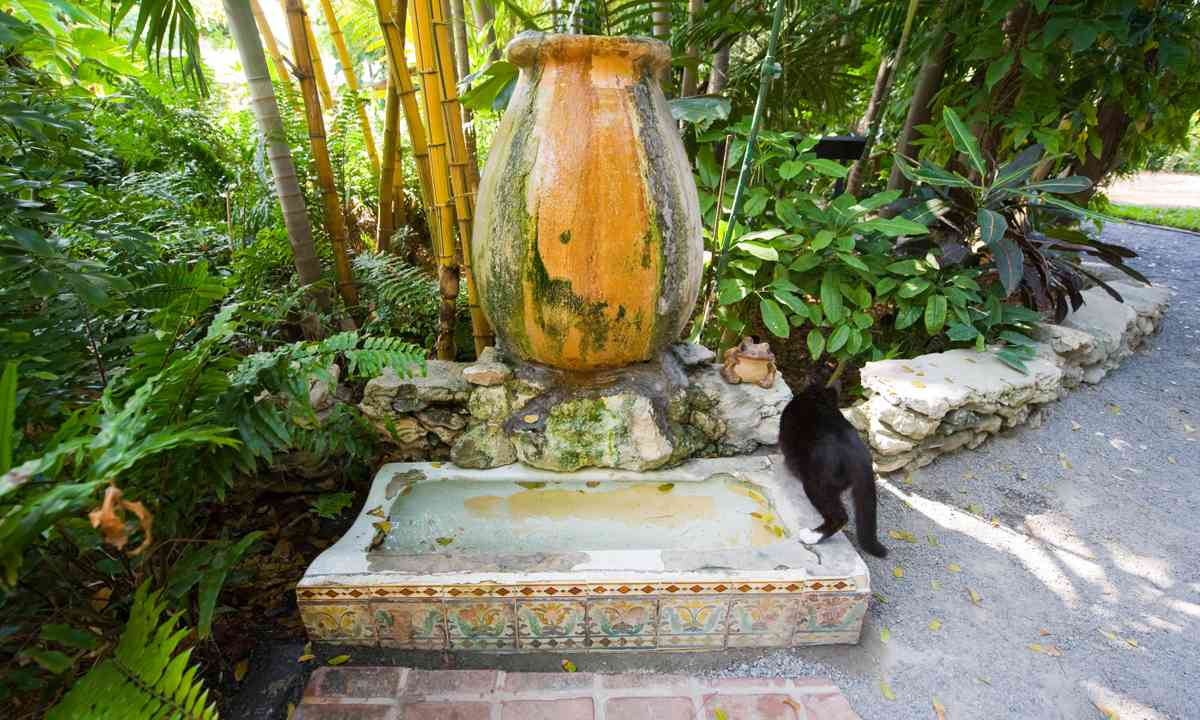 Cat on famous urinal drinking fountain (Dreamstime)