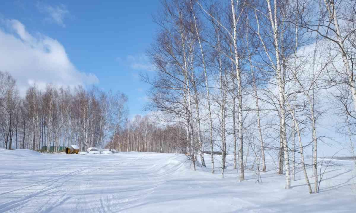 Winter forest in Furano, Hokaido (Shutterstock)