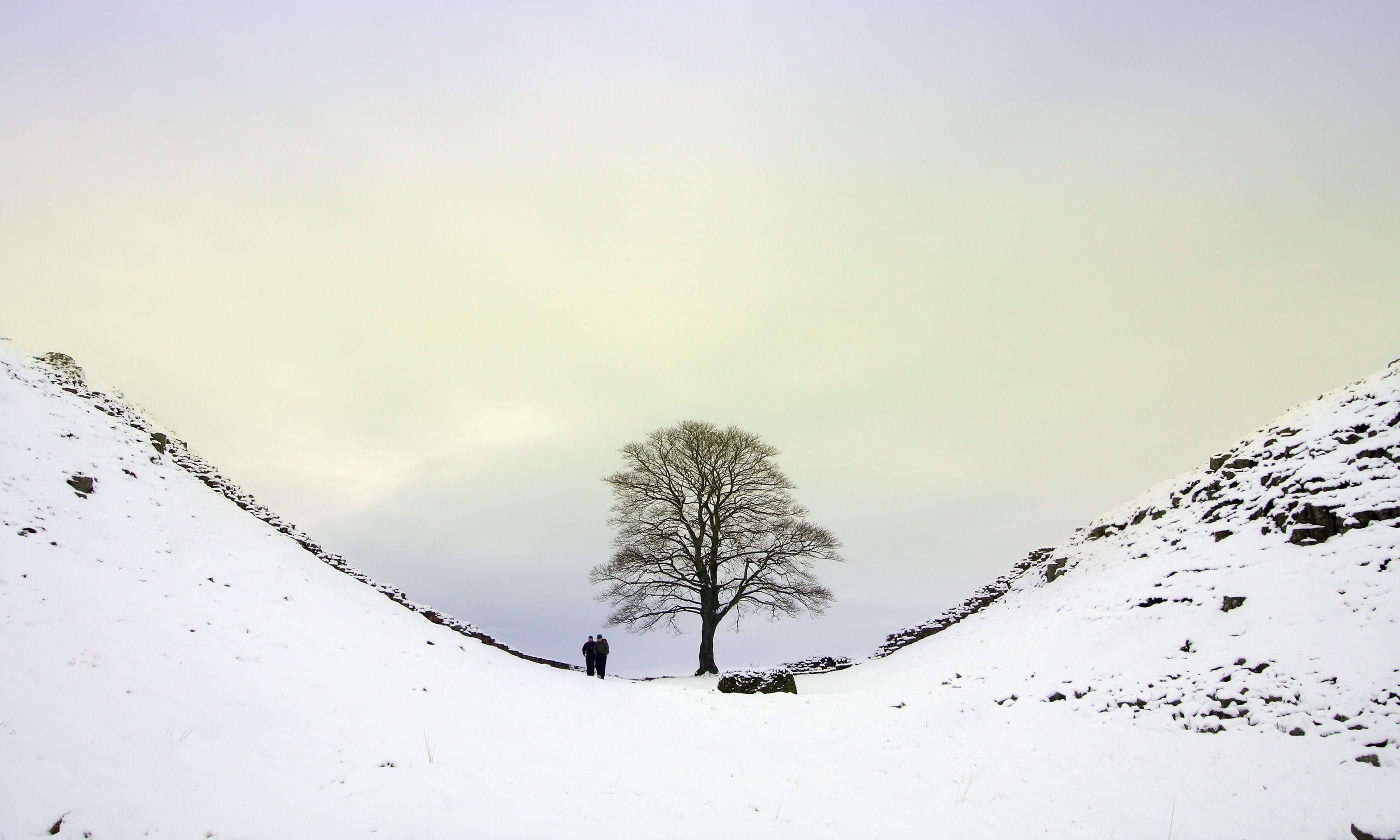 Winter at Sycamore Gap (Dreamstime)