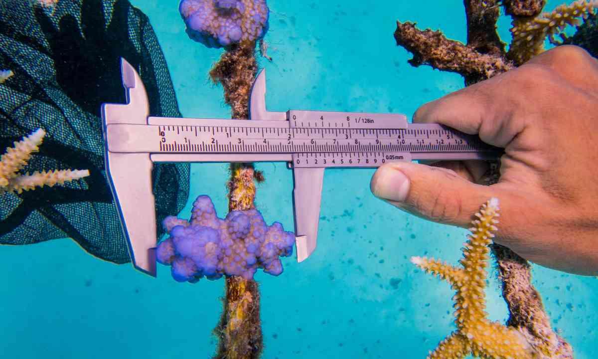 Measuring coral on Gili Lankanfushi (Green Pearls)