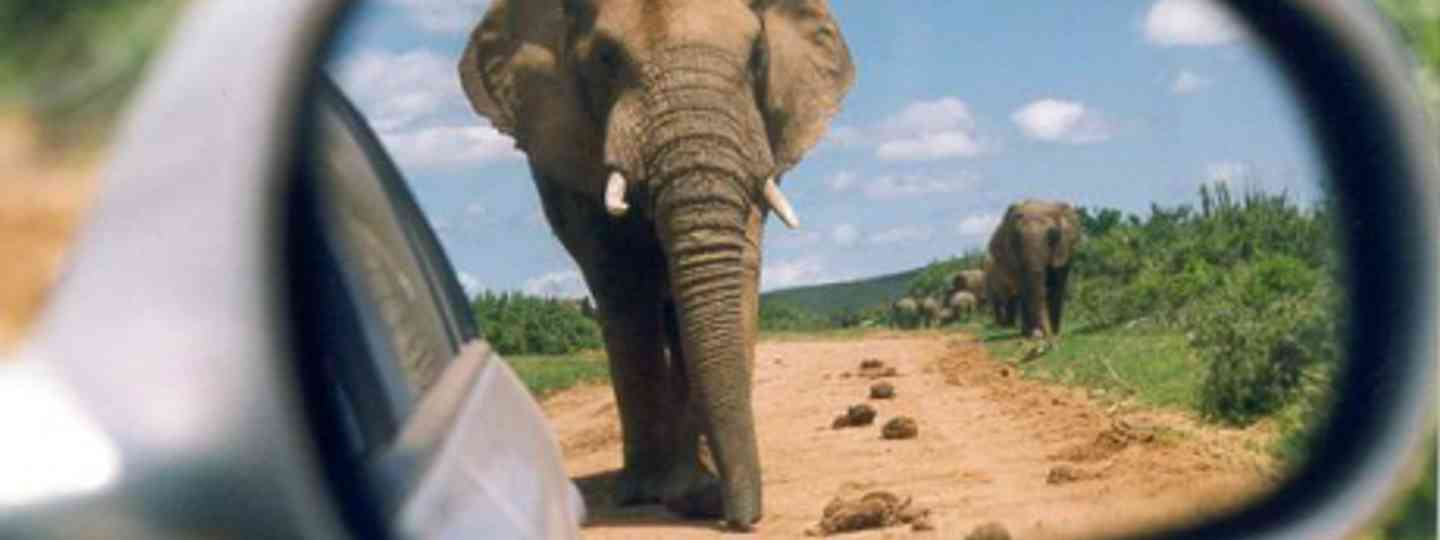 """We came face to face with a huge and angry elephant"" (Brian Snelson)"