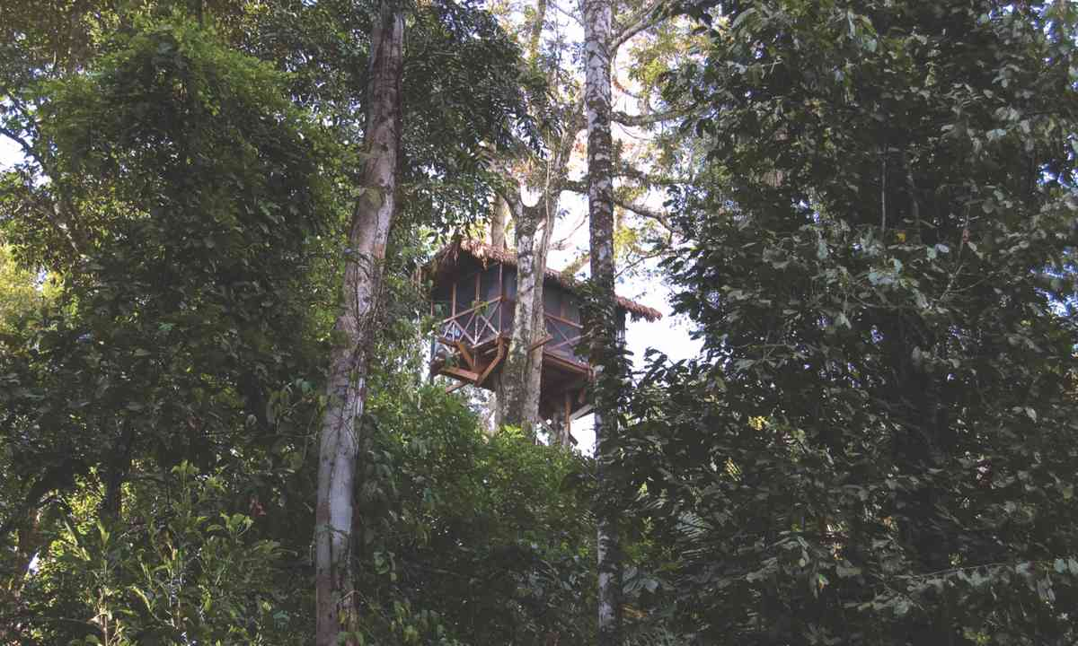 Treetop accommodation, Reserva Amazónica Lodge (Green Pearls)