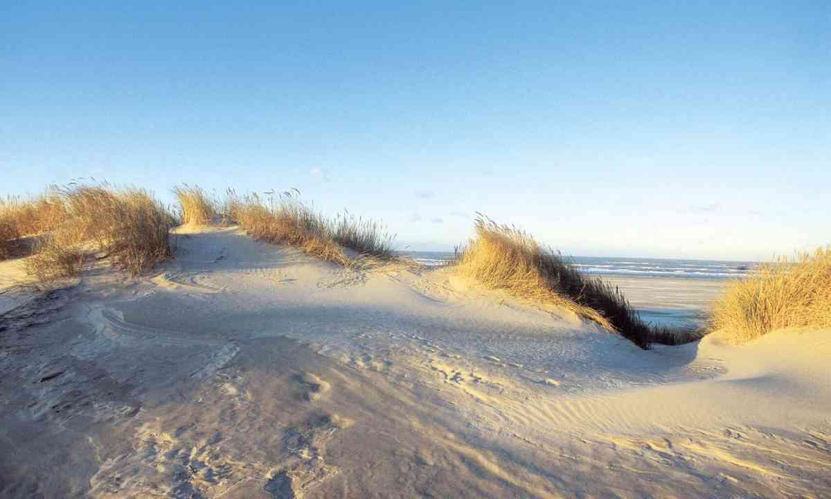 The litter-free dunes of Juist (Green Pearls)