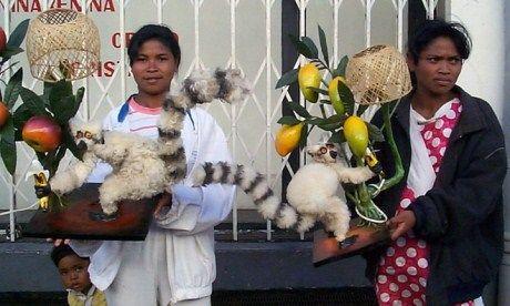 Lemur lamps