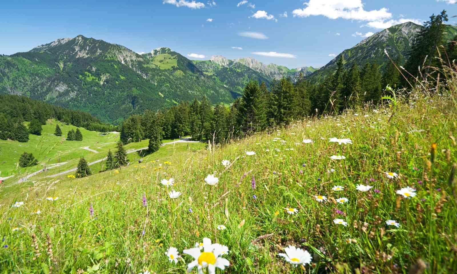 A German meadow in Allgaeu (Dreamstime)