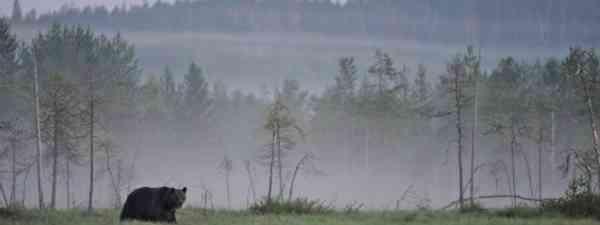 Bear watching in Finland's wilderness (Joni-Pekka Luomala)