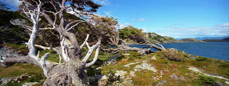 Tierra Del Fuego (reurinkjan)