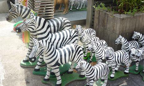 Wild zebras in Bangkok