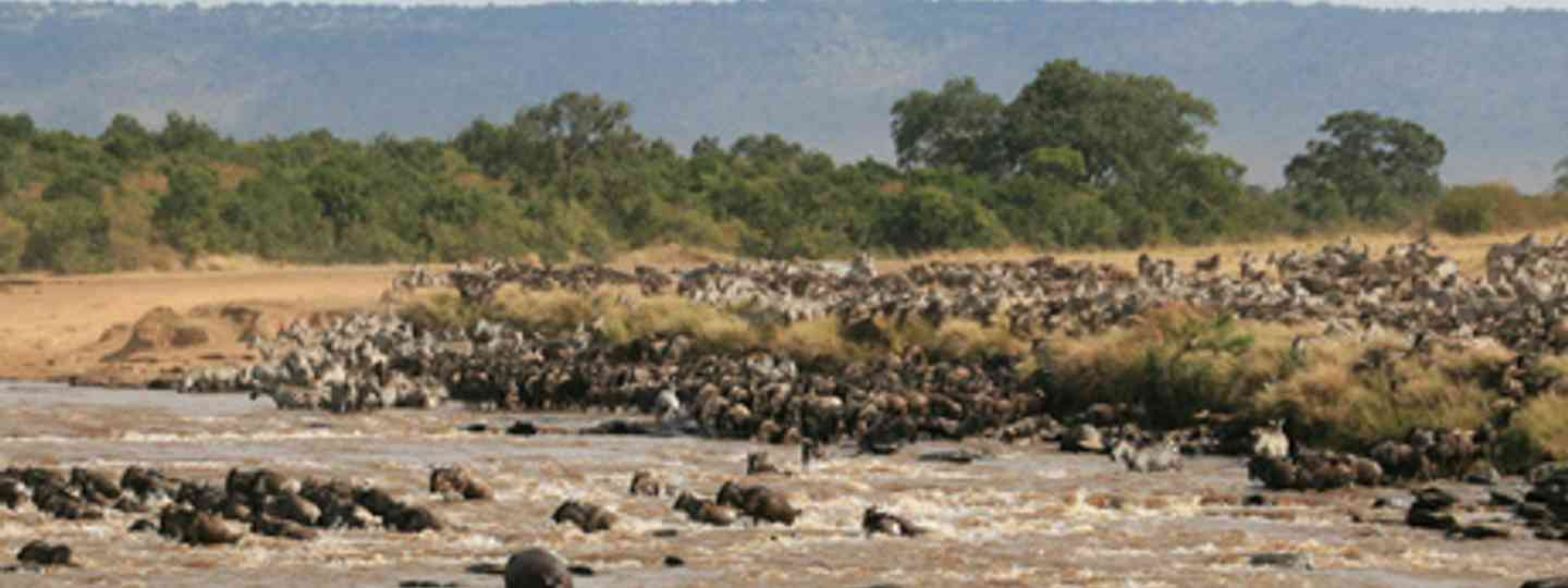 The great migration, Tanzania (Michiel Van Balen)