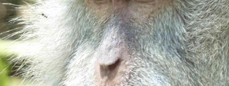 Monkey contemplation (Marie Javins)