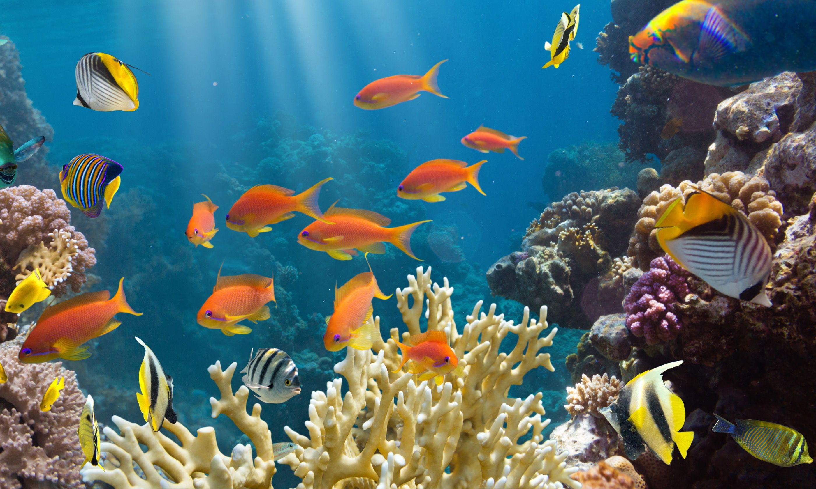 Colourful tropical fish (Dreamstime)