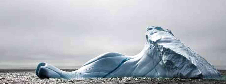 Nature's floating giants in Newfoundland (Natalie Lucier)