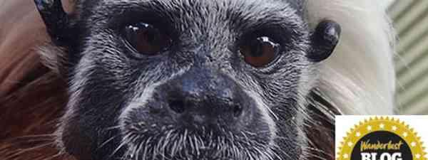 Monkey (Emma Spires)