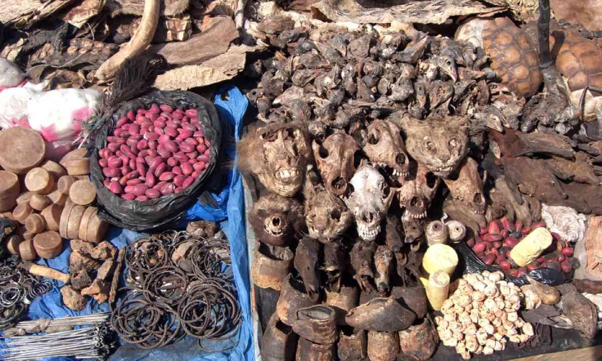 Goods for sale at West African fetish market (Shutterstock)