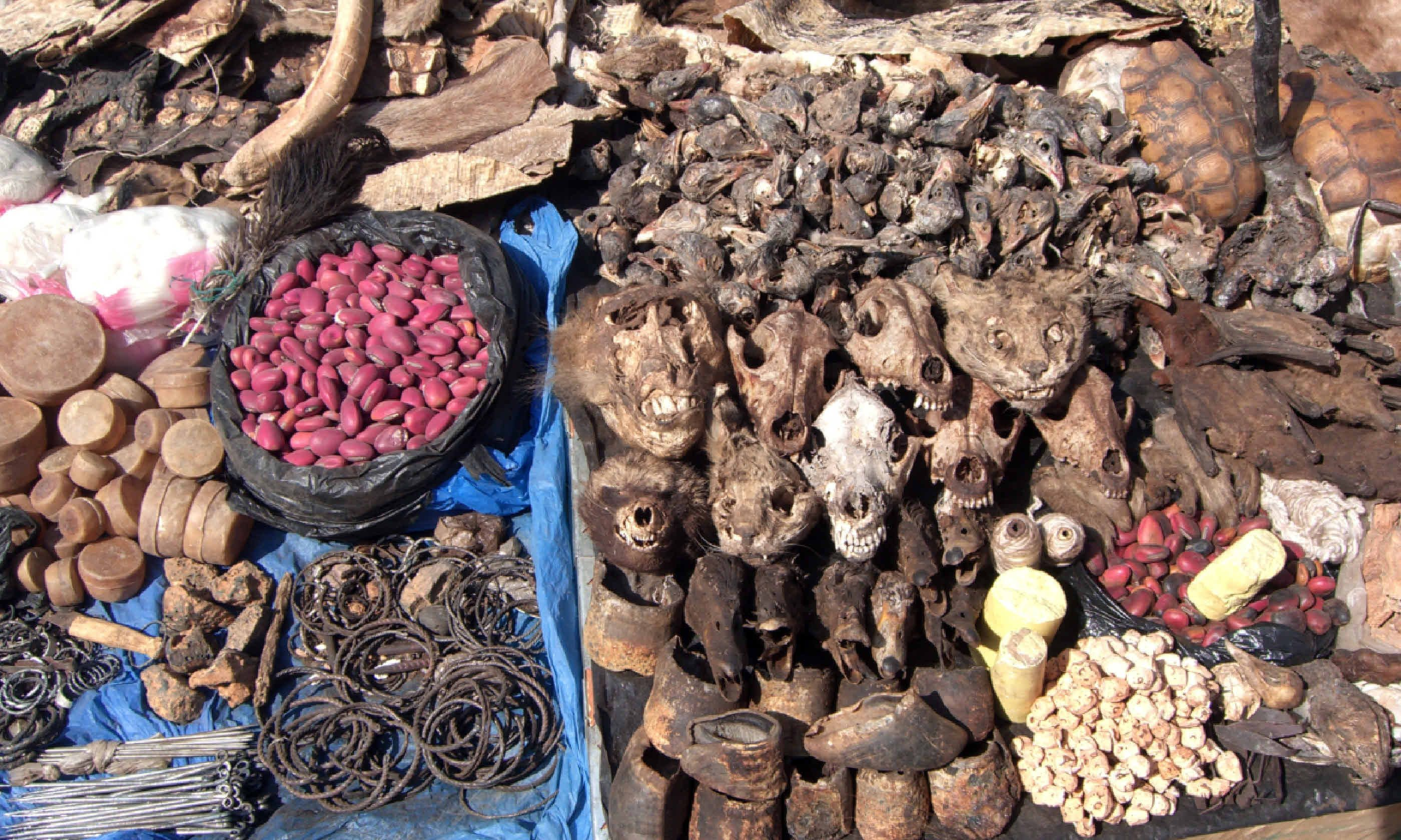 Goods for sale at West African fetish market (Shutterstock)