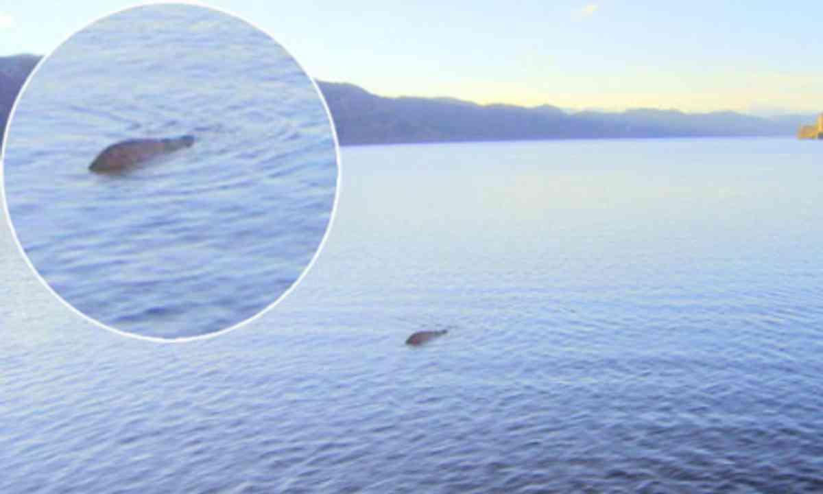 Nessie (Cascade News)