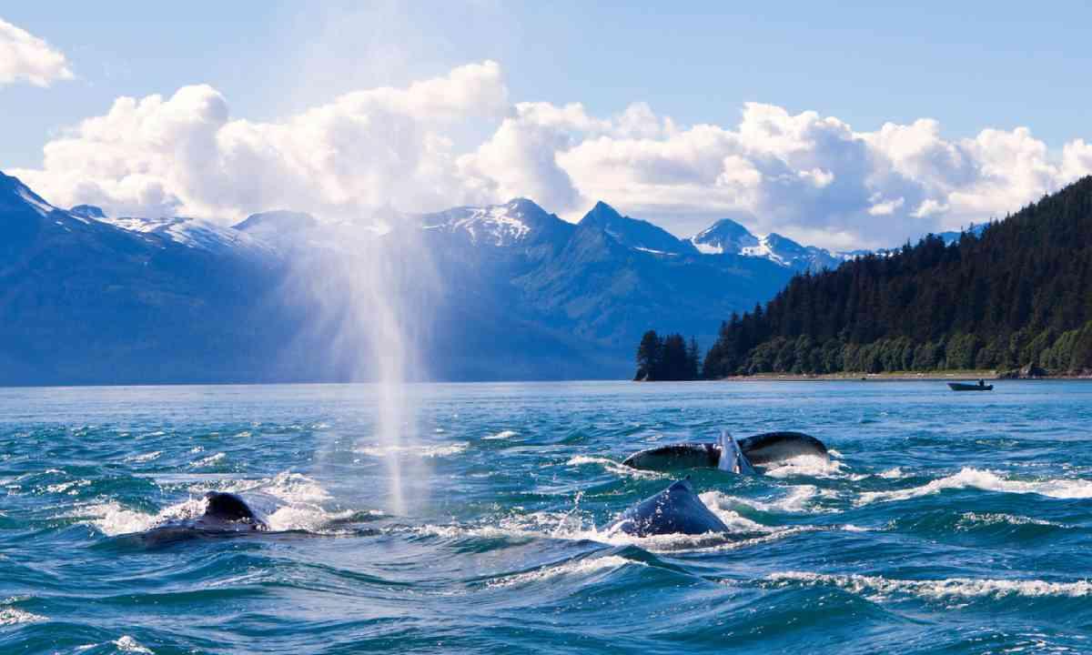 Humpback whaled in Juneau, Alaska (Shutterstock)