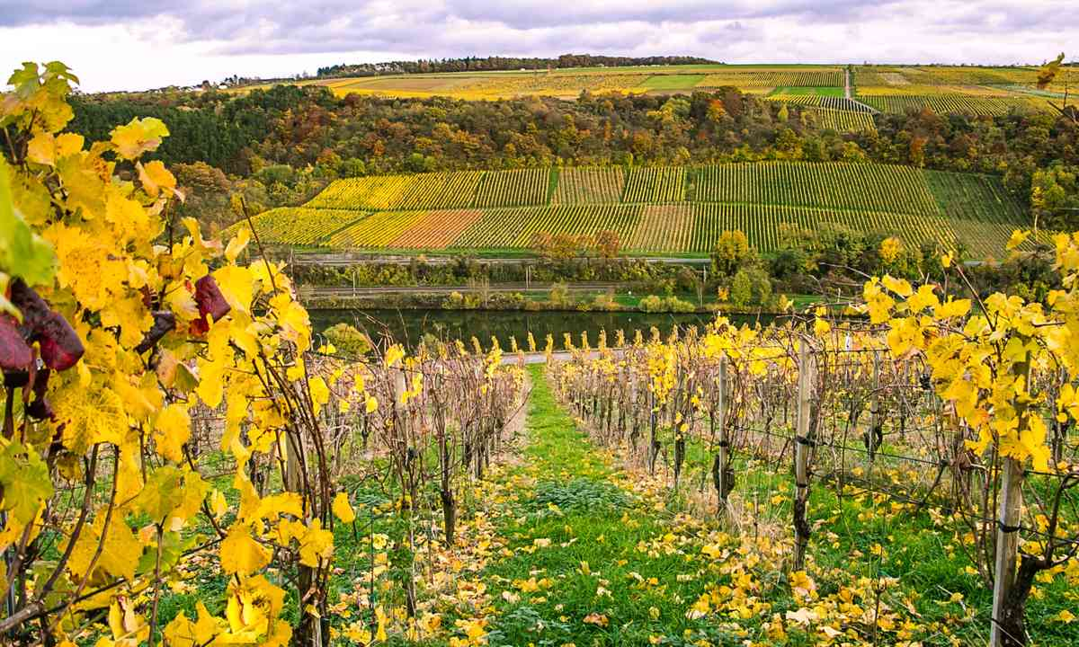 Vineyards along the River Moselle (Dreamstime)