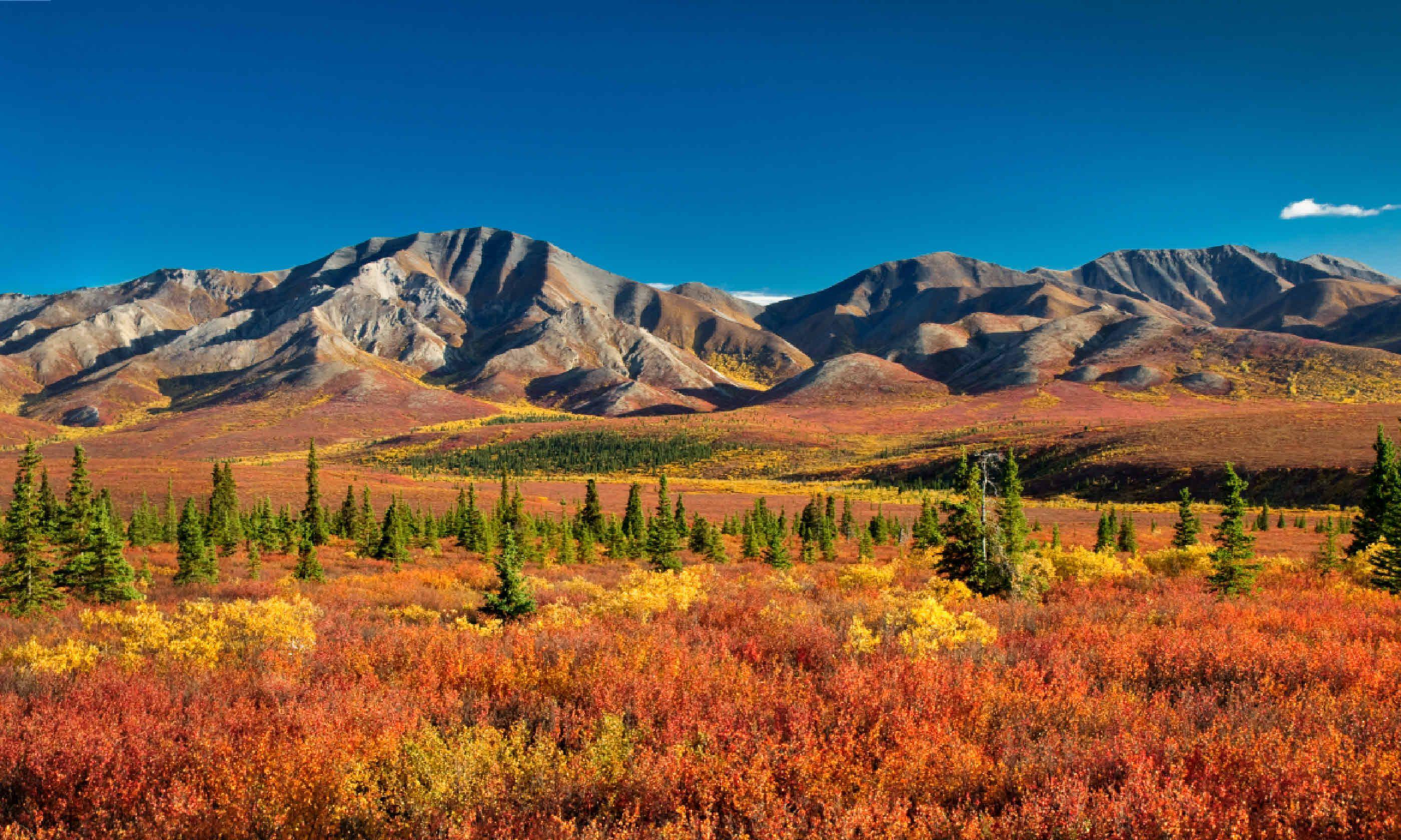 Denali National Park (Shutterstock)