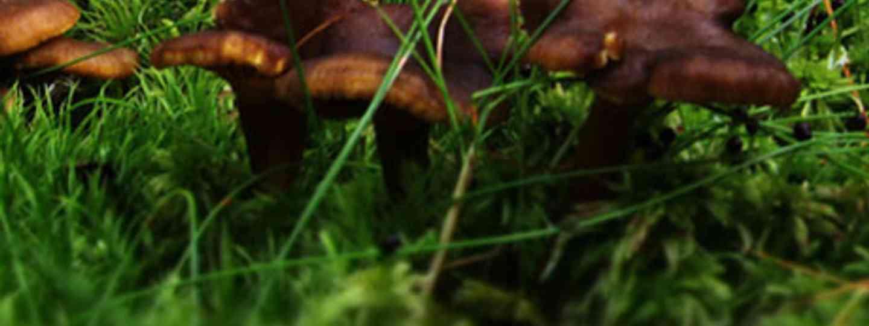 Finnish mushrooms (http://feelthenature.fi)