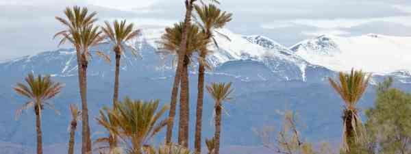 Palm trees and Atlas Mountains (Shutterstock: see credit below)