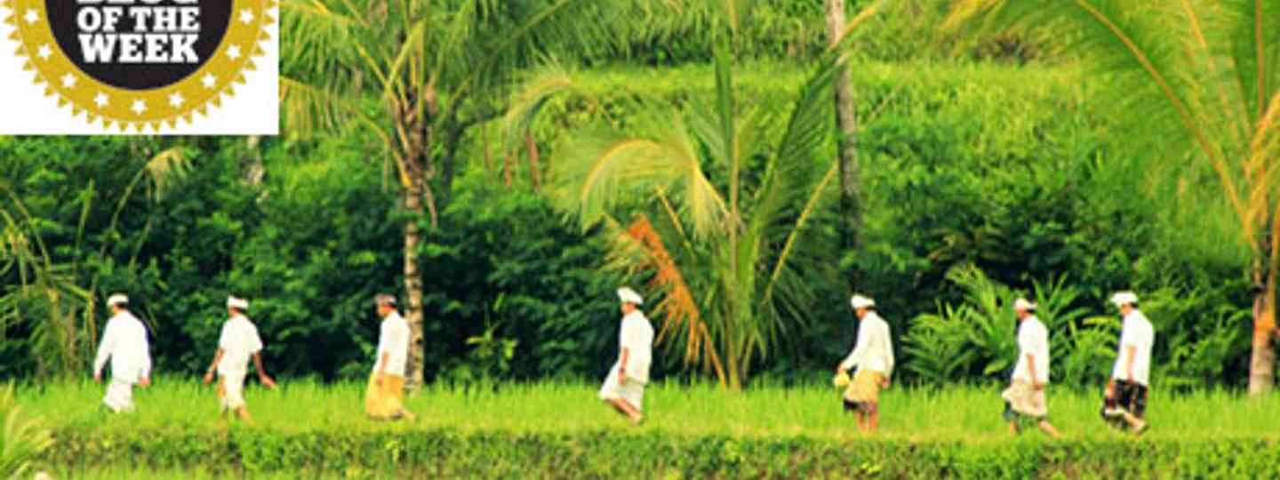 rice workers (Travel_Shutter)