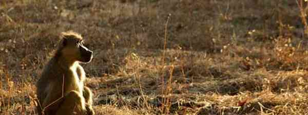 Wildlife is all around you on a walking safari (Damien Firmenich)