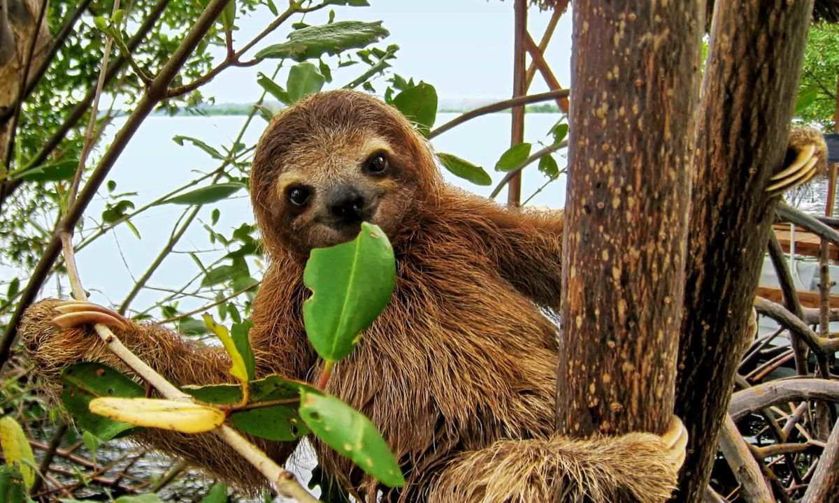 6 fast fun facts you didn't know about sloths