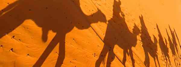 Camel shadows (Heather Cole)