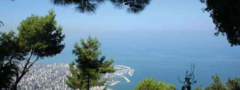 Cedars of Lebanon (Martin Symington)